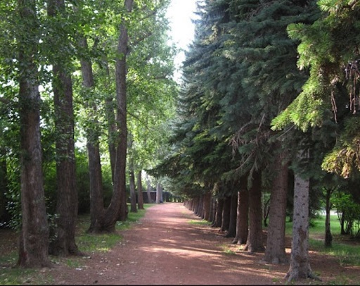 Path through the woods at Edworthy Park