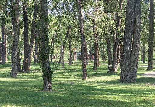 Trees and grass view of Pearce Estates Park