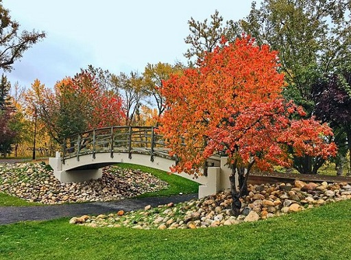 Bridge in Prince's Island Park during Autumn