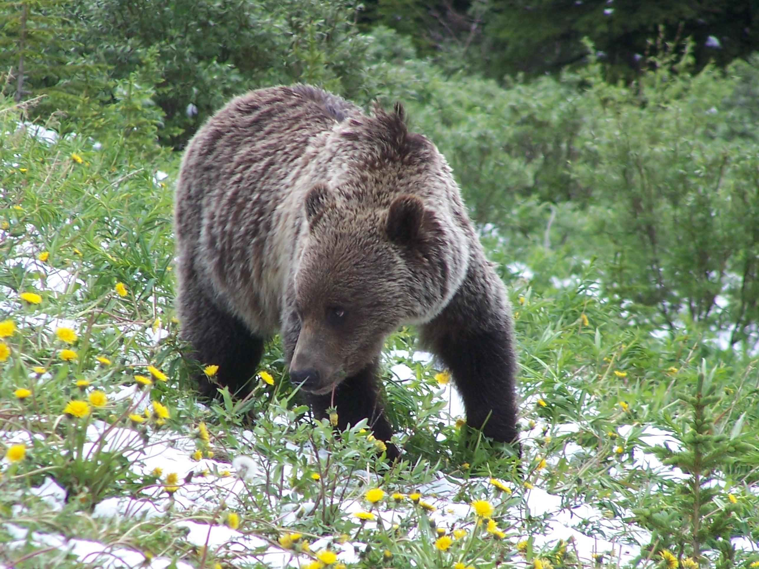 Where to View Wildlife Around Banff National Park